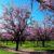 Czego się używa przy pracy koło uszlachetniania drzew?