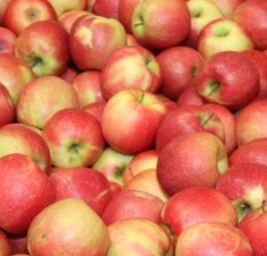 Budowa jabłka